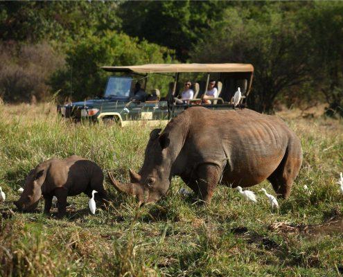 Elsas Game Drive - Rhino